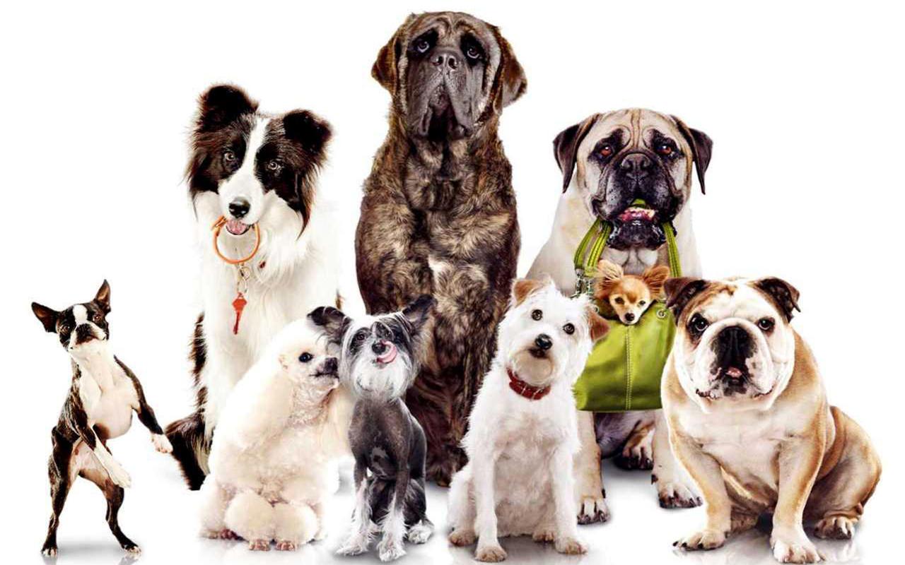 собака - член семьи и лучший друг