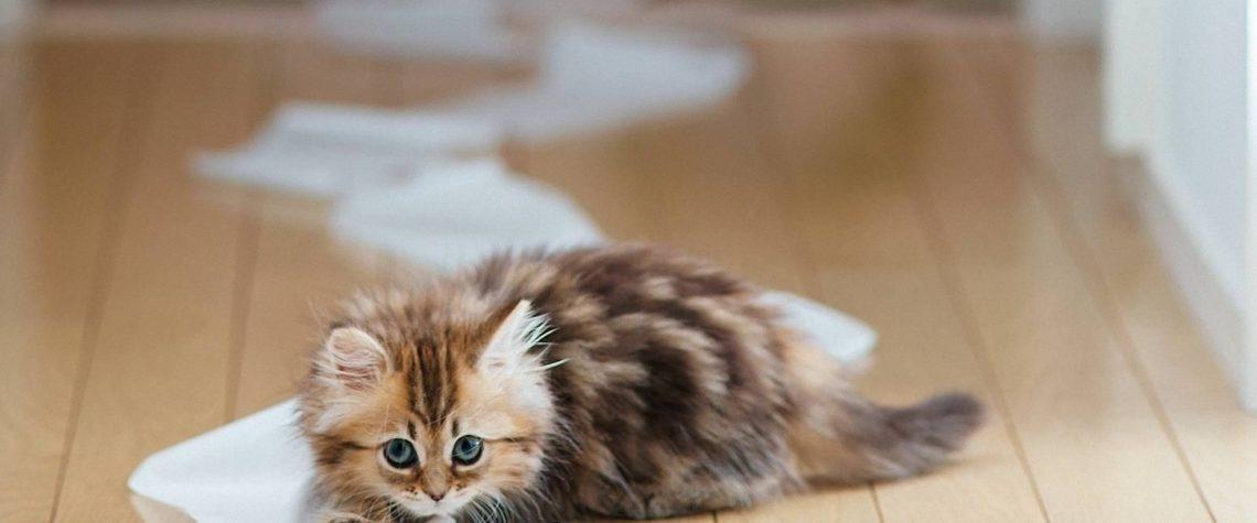 котенок в доме - радость всей семьи