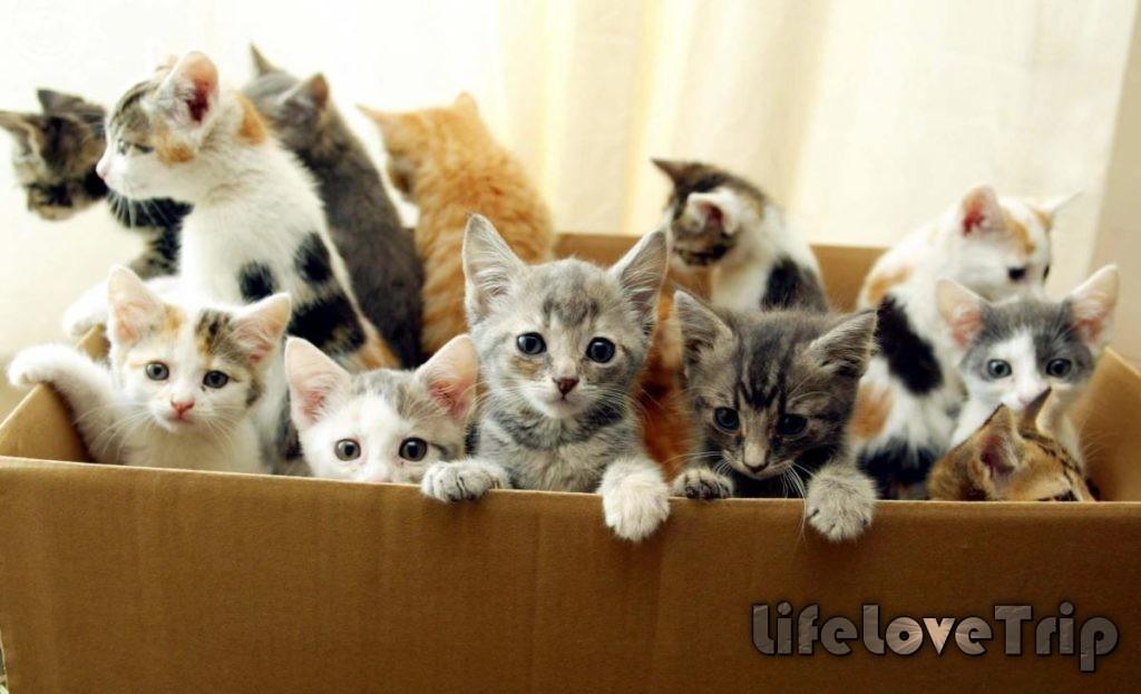 котята бывают разных цветов и с разным темпераментом