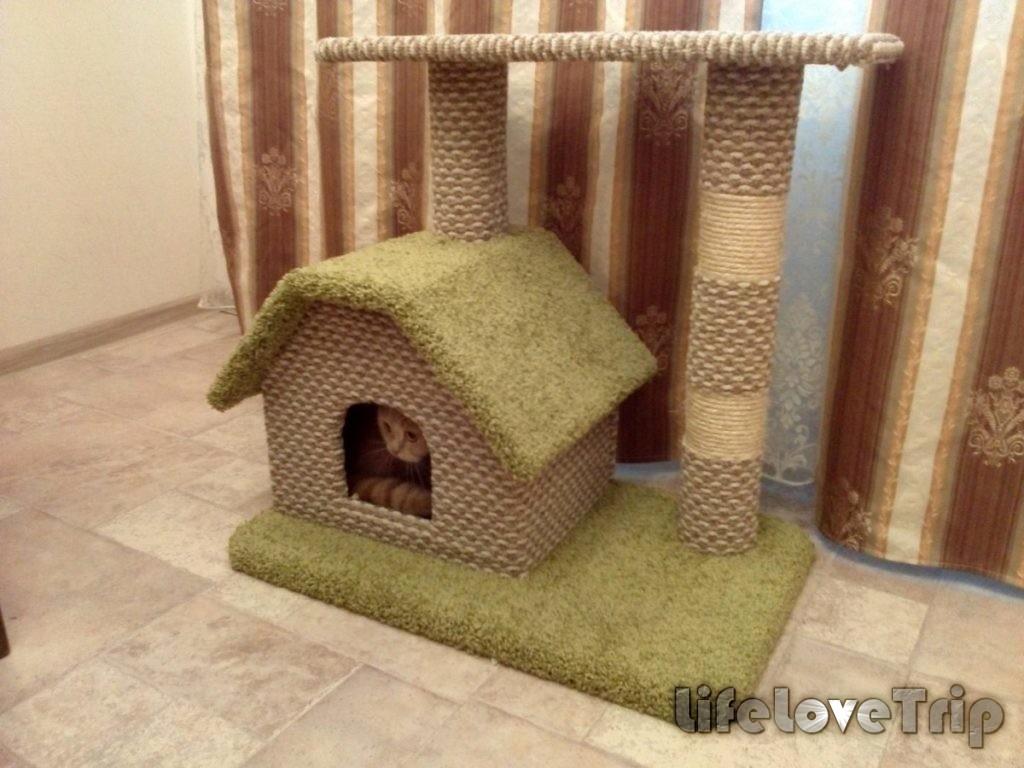 домик для кошки - необходимость