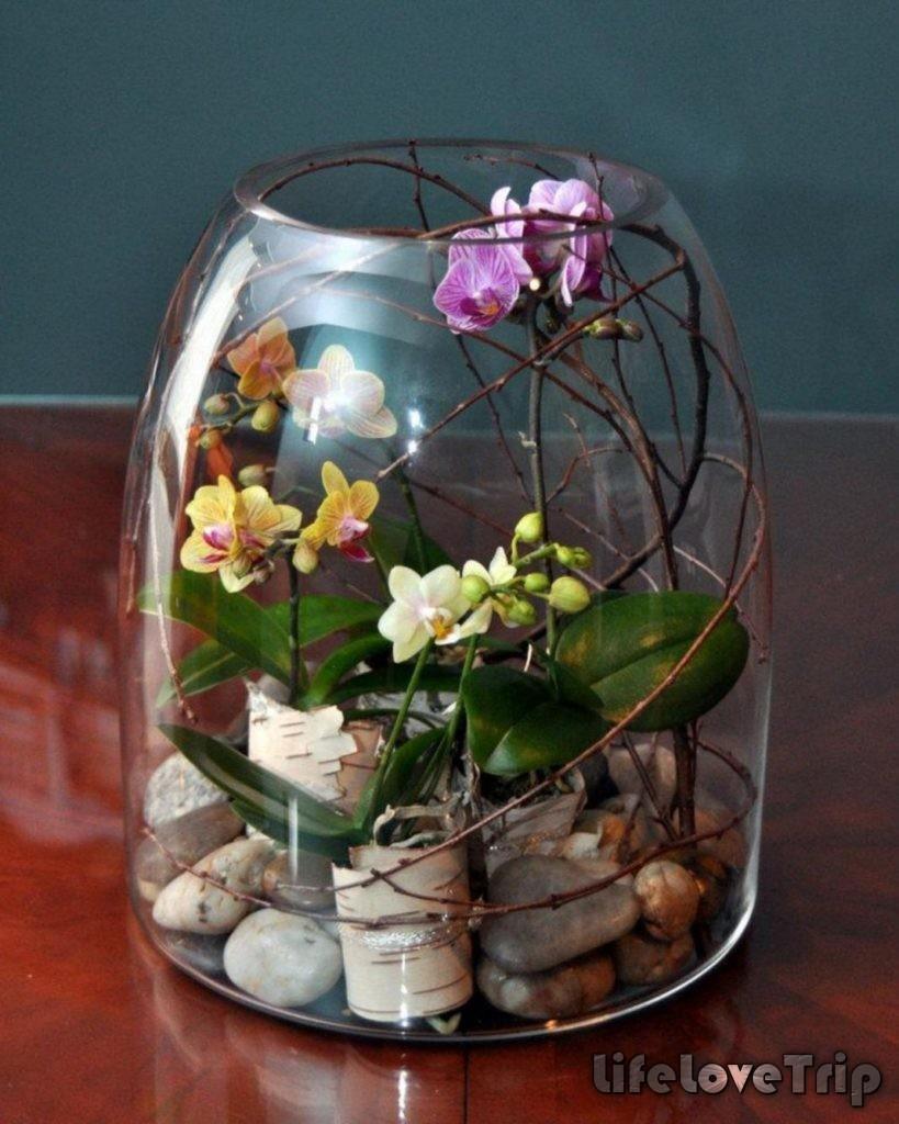 мини-орхидеи в аквариуме выглядят очень необычно