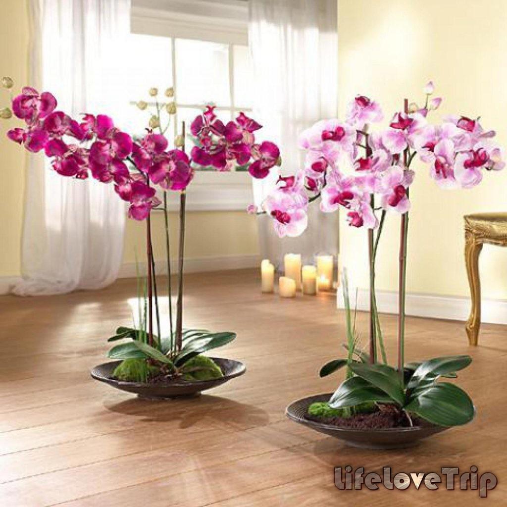 орхидеи в интерьере радуют вас каждый день