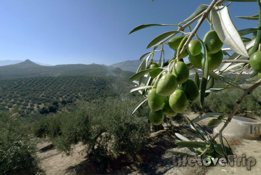 сельское хозяйство в жизни в испанской деревне